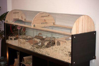 Naturnahe Hamstergehege: Detolf mit Aufsatz für Goldhamster