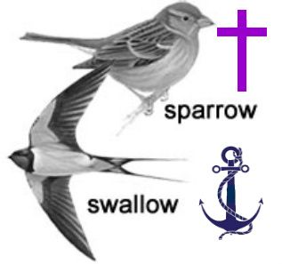 Wren vs Sparrow - What's the difference?
