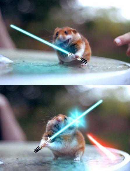 Funny Pictures - Jedi Hamster. I love hamsters
