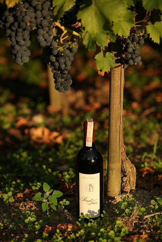 Wine trail, Poland. Polish vineyards are located in Western part of Poland between Zielona Gora and Gorzow Wielkopolski.
