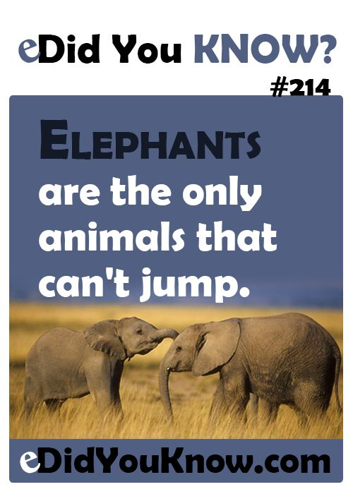 Did You Know Facts About Animals Did-you-know-214 · animals