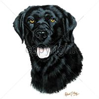 Black Lab T Shirt by Robert May: Available in several types of T shirts and sweatshirts, this Black… #PetProducts #PetGifts #AnimalJewelry