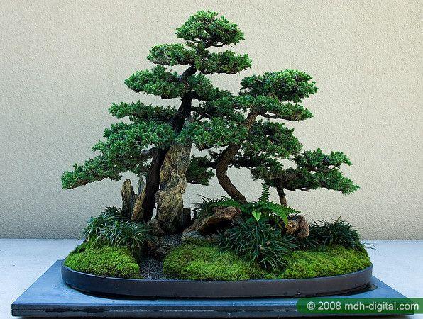 bonsai-saikeiBONSAI TREESAt FOSTERGINGER @ Pinterest.♦️