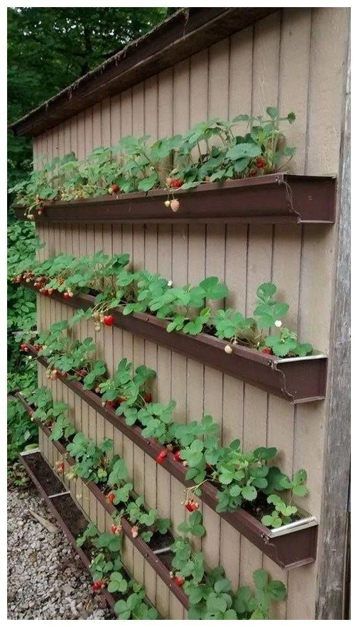 36 ideas for horticulture on a budget 36