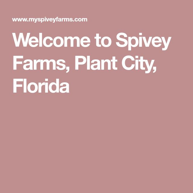Welcome to Spivey Farms, Plant City, Florida