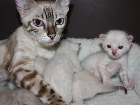 Kitten Cat Eyes