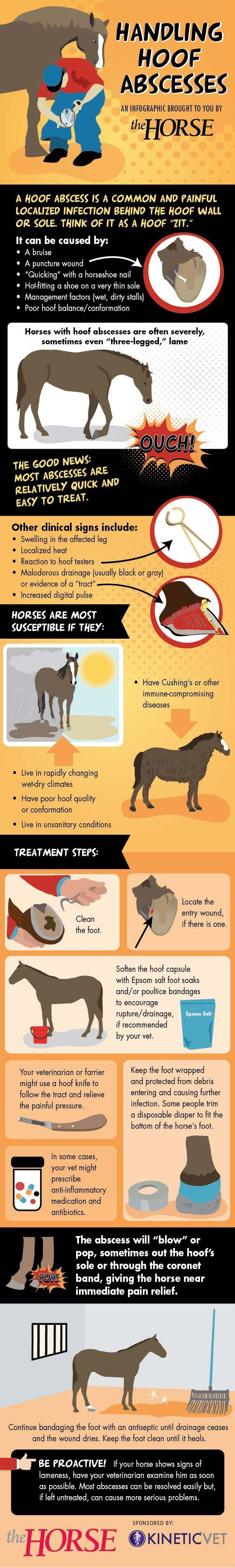 [INFOGRAPHIC] Handling Hoof Abscesses - Hoof abscesses are a common cause of…