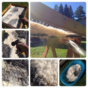 How to felt a rug from raw fleece