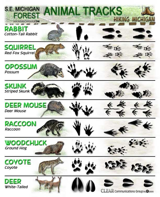 Animal tracks:  We could have used this a few times while camping.