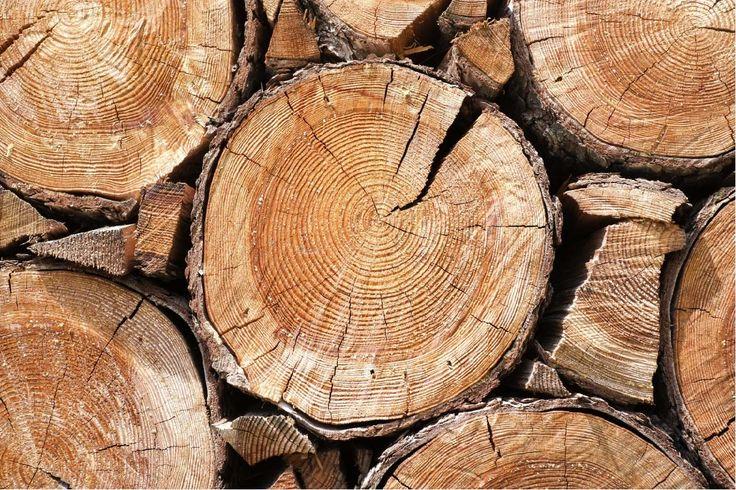 Papel mural troncos