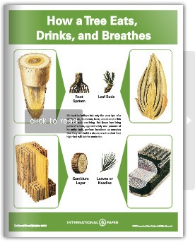 How a tree eats drinks and breathes - Download the PDF