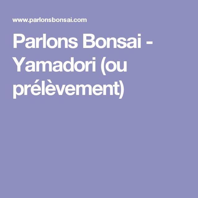 Parlons Bonsai - Yamadori (ou prélèvement)