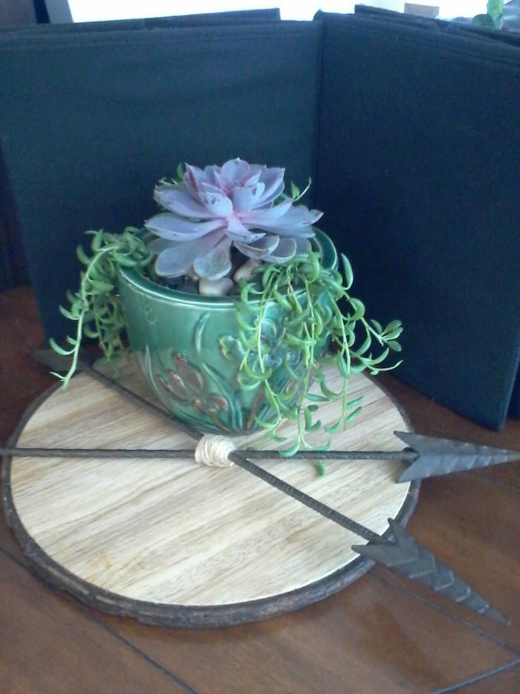 Succulents and Native American crossed arrows, symbol of Friendship