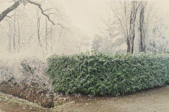 Magreta di Formigine, 1988 da Luigi Ghirri