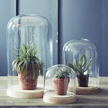 Glass Cloches / Bell Jars / Table Centres with succulents and cacti  Bevin Beech Based Domes, Rowen & Wren