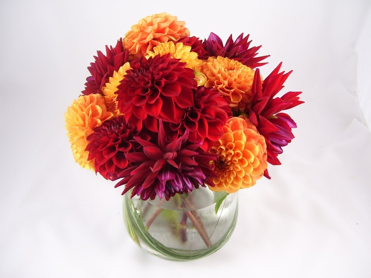Best images about dahlia ideas for centerpieces on
