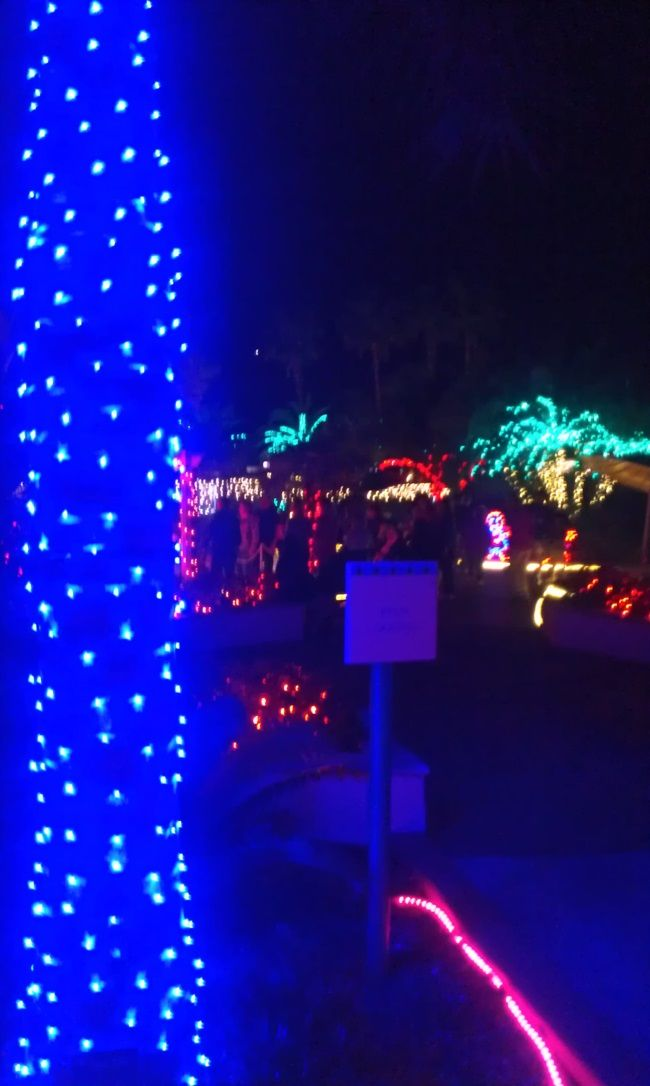 Holiday lights in the park florida botanical garden Largo botanical gardens christmas lights