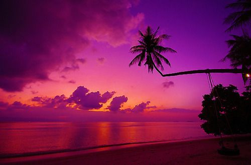 Tropical Island Beach Sunset: Pink And Purple Tropical Sunset!