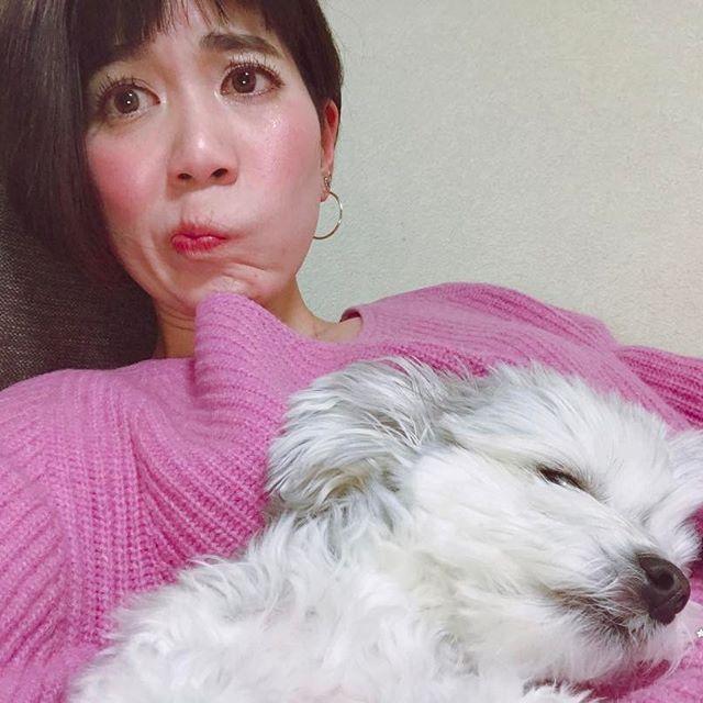 退いてくれへんマハロ。 #mahalo#chihuahua#yorkie#mixdog#dog#ミックス犬#チワワ#ヨークシャテリア#愛犬#犬#大好き#sleepydog#selfie#scooch#hawaii#dogstagram#cute#pet#family