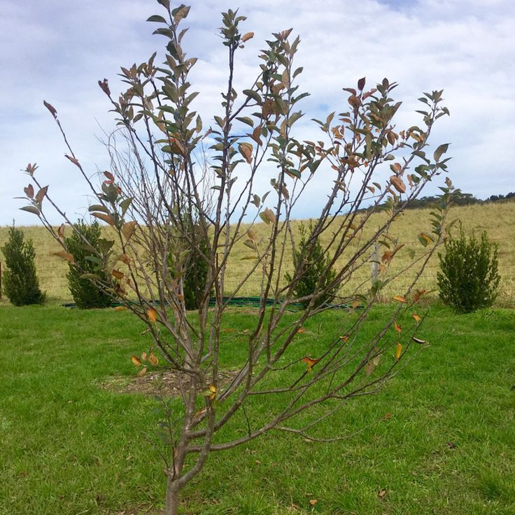 In the orchard. It's a good time of year to prune fruit trees.