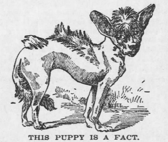 The Coffeyville Daily Journal, Kansas, March 6, 1897