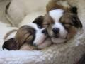 Sleeping sweeties  http://www.greenme.it/vedere/cuccioli#