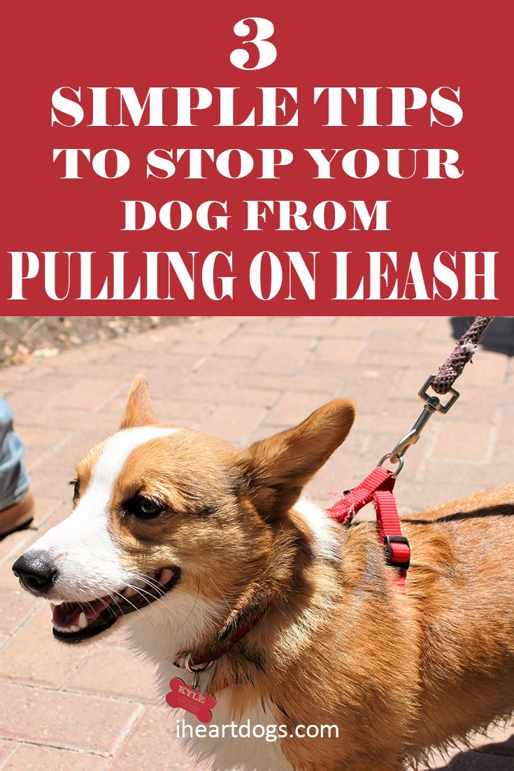 Leash walking shouldn't be a battle!