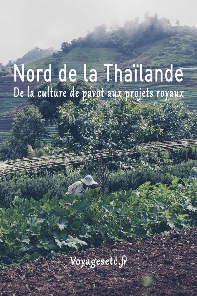 De la culture de pavot aux projets royaux, visite d'un projet royal vers Chiang Mai au nord de la Thaïlande