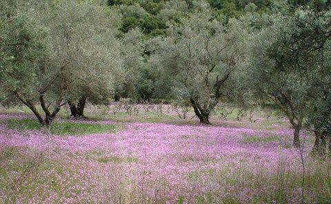 Spring colours  #lefkadaslowguide #lefkadazin #lefkada #lefkas #ionian #spring #colours #beauty #flora #trees