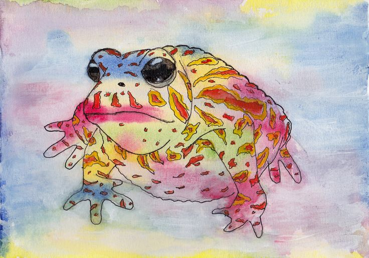 Do You Want More of These Bright and Colorful Amphibians?