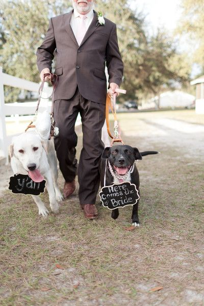 Oh my gosh, how adorable are these dog ring bearers!!!!