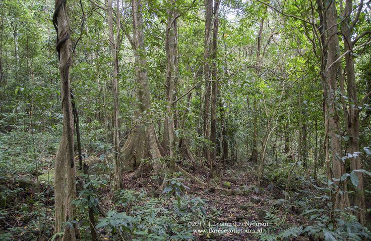 Trekking in Mbeliling forest - Flores island