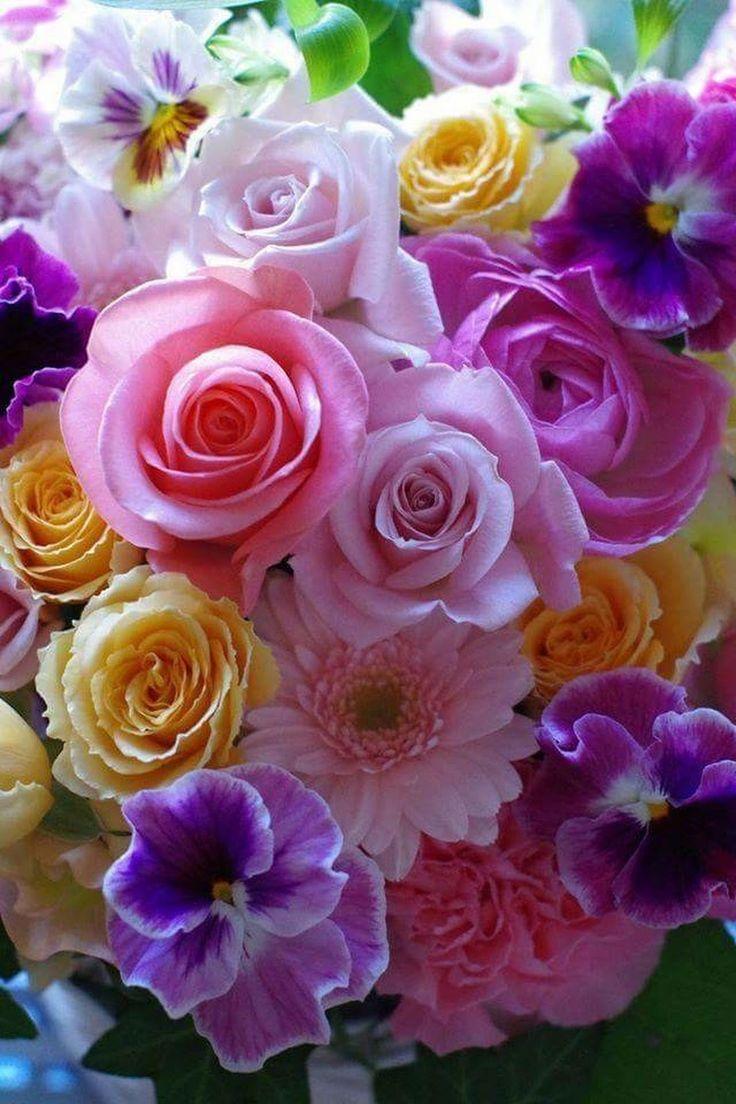 Смотреть онлайн картинки красивые цветы