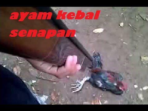 Kejadian Aneh, kejadian aneh di indonesia, Ilmu kebal merujuk kepada keupayaan seseorang bagi menahan tubuhnya daripada ditembusi oleh senjata ataupun peluru