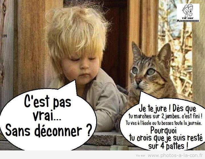 Image drole enfant chat ote pinterest cats - Dessin chat humour ...