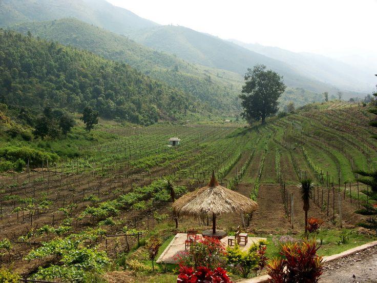 10 novas e atípicas regiões que entraram no mapa do vinho: Myanmar (Birmânia)!