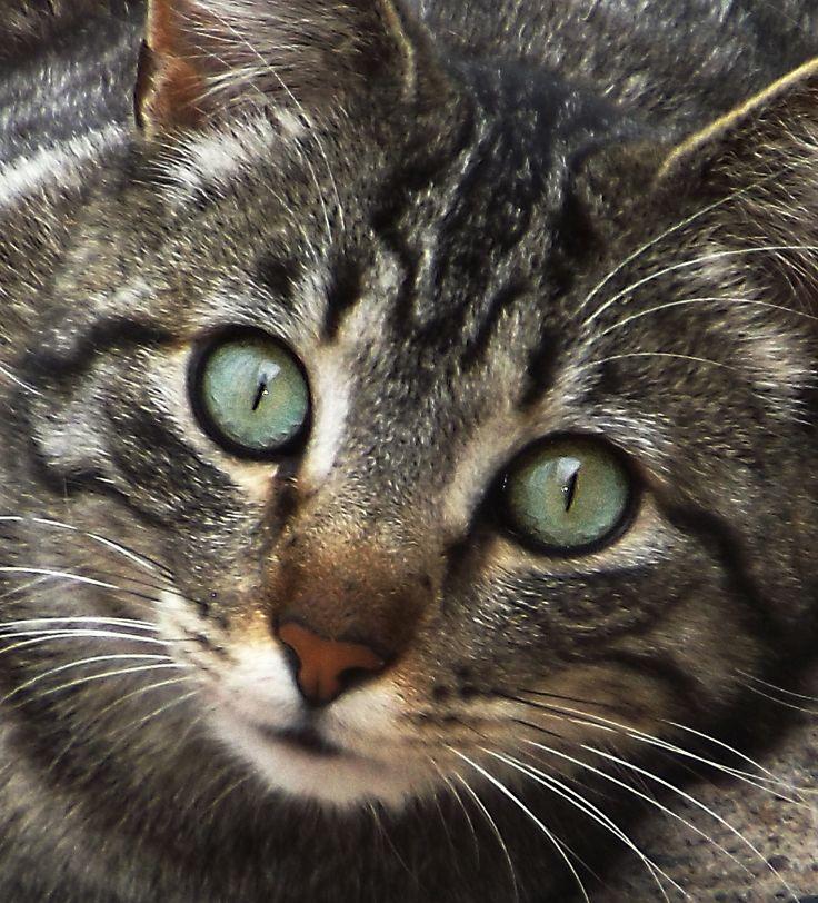 El gato del vecino...