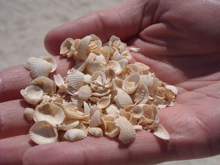 Shell beach - made up of tiny little shells. Francois Peron National Park in Denham, WA