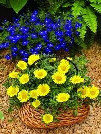 Aranytallér virág - napsugár a kertben | Dísznövény és dendrológia | Kertportál.hu