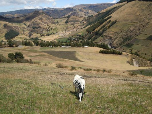 A Nation on the Rise: Sustainable Agriculture in Ecuador
