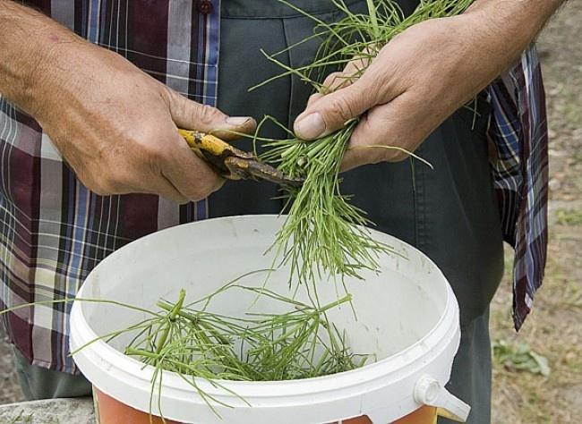 Traiter et enrichir le jardin avec les plantes : 8 remèdes naturels. (Absinthe, Consuelda y otras hierbas)