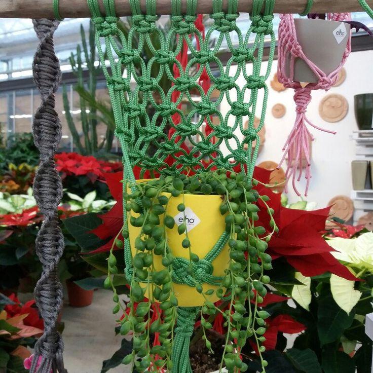 Nella versione verde con un vaso giallo, per aggiungere una bella nota di colore alla casa.
