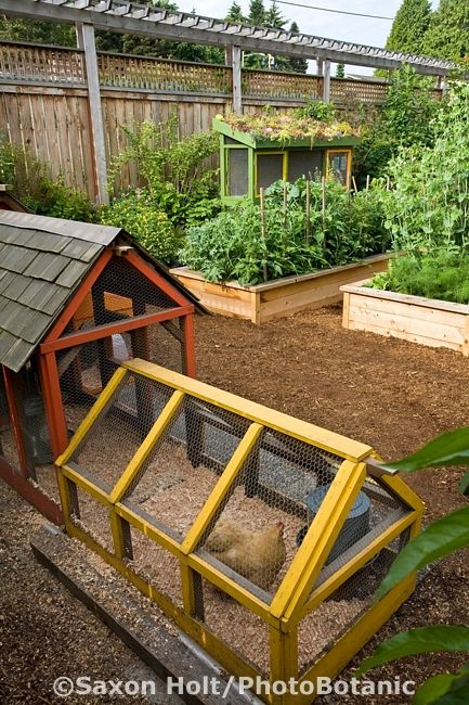 A neat and brightly colored chicken coop in an urban garden in Seattle, Washington. Note: Part of the chicken coop is open aired and the other is sheltered by a shake roof.