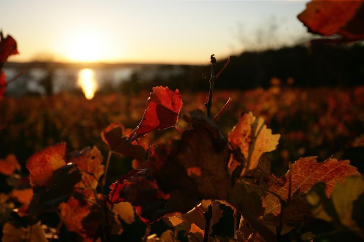 Auch im Herbst ist der Bodensee ein tolles Ausflugsziel!