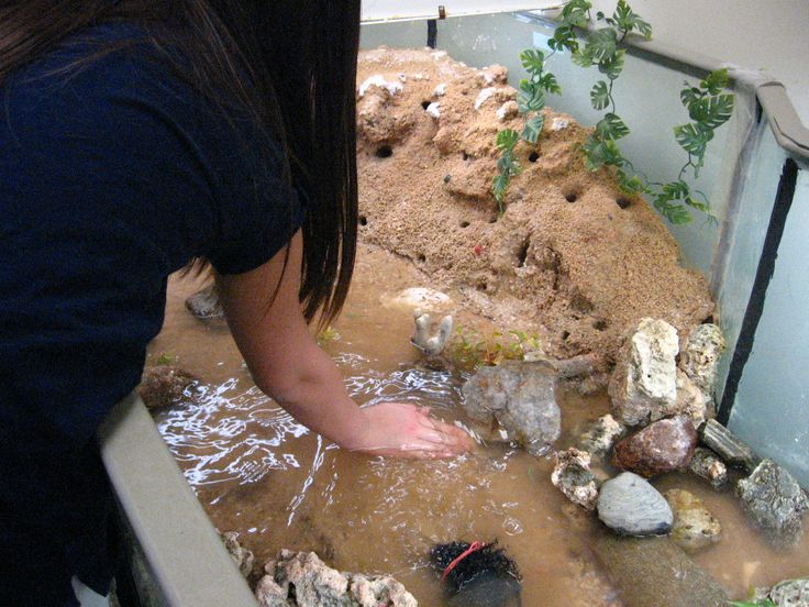 Fiddler Crab Habitat | Aqua Havens for Education ...