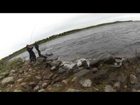 Laponia 2015 . Successful fly fishing adventure 2015.