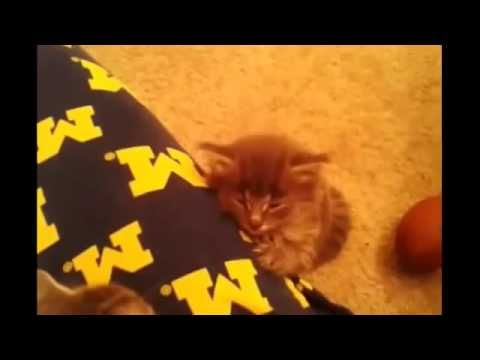 silly cat compilation 2016 - αστείες γάτες! funny cats compilation (hq) 2016 - http://positivelifemagazine.com/silly-cat-compilation-2016-%ce%b1%cf%83%cf%84%ce%b5%ce%af%ce%b5%cf%82-%ce%b3%ce%ac%cf%84%ce%b5%cf%82-funny-cats-compilation-hq-2016/ http://img.youtube.com/vi/5gQRmOGQiGU/0.jpg                                             An epic compilation with funny and cute cats in one video – My cat food: !!! Your cat will love it too !!! Our promoter Instan