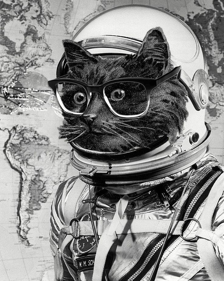 один котик в скафандре картинки причин, почему