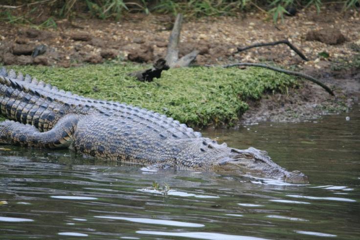 Crocodile Express Daintree Cruises