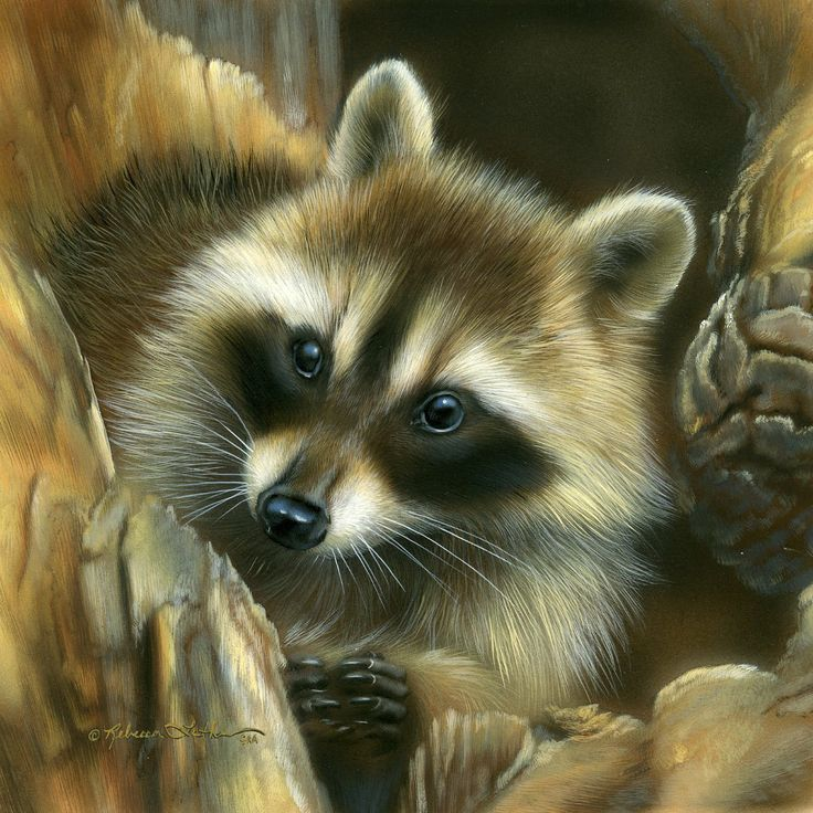 1000+ ideas about Raccoon Art on Pinterest | Raccoon ... Raccoon Painting